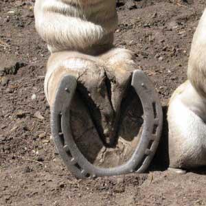 conan-shoe
