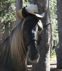 spencer-hat